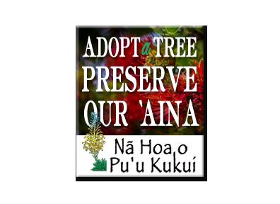 Adopt a Tree - Pu'u Kukui
